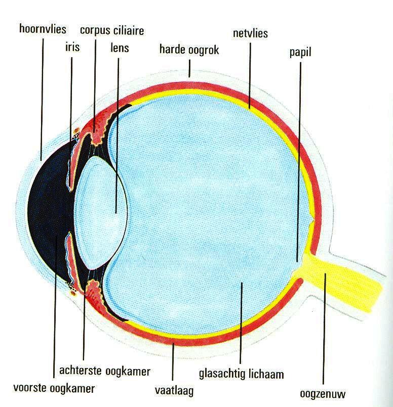 menselijk lichaam overzicht